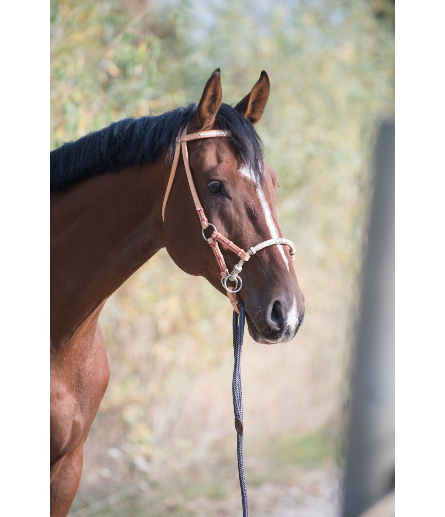 Bitless bridle reviews? - The Horse Forum
