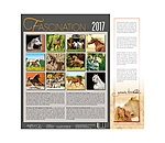 Boiselle Fascination Arabische Pferde 2017 - 995 - 5
