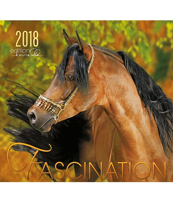 Boiselle Fascination Arabische Pferde 2017 - 995